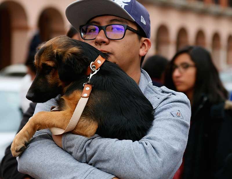 Listas más de 400 mil vacunas para perros y gatos