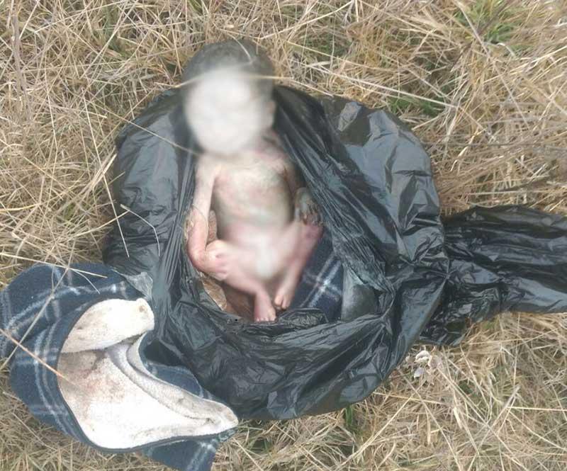 Perros olfatean feto de bebé en Villa Victoria