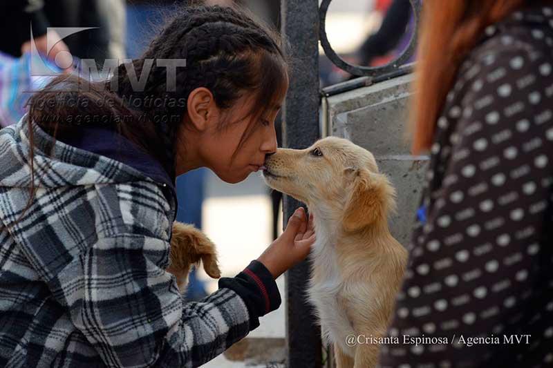 Invitan a esterilizar mascotas en once delegaciones de Toluca