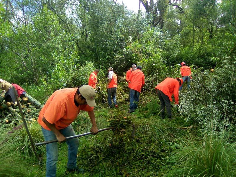 Más de 800 hectáreas de bosque en Juchitepec están afectadas por muérdago