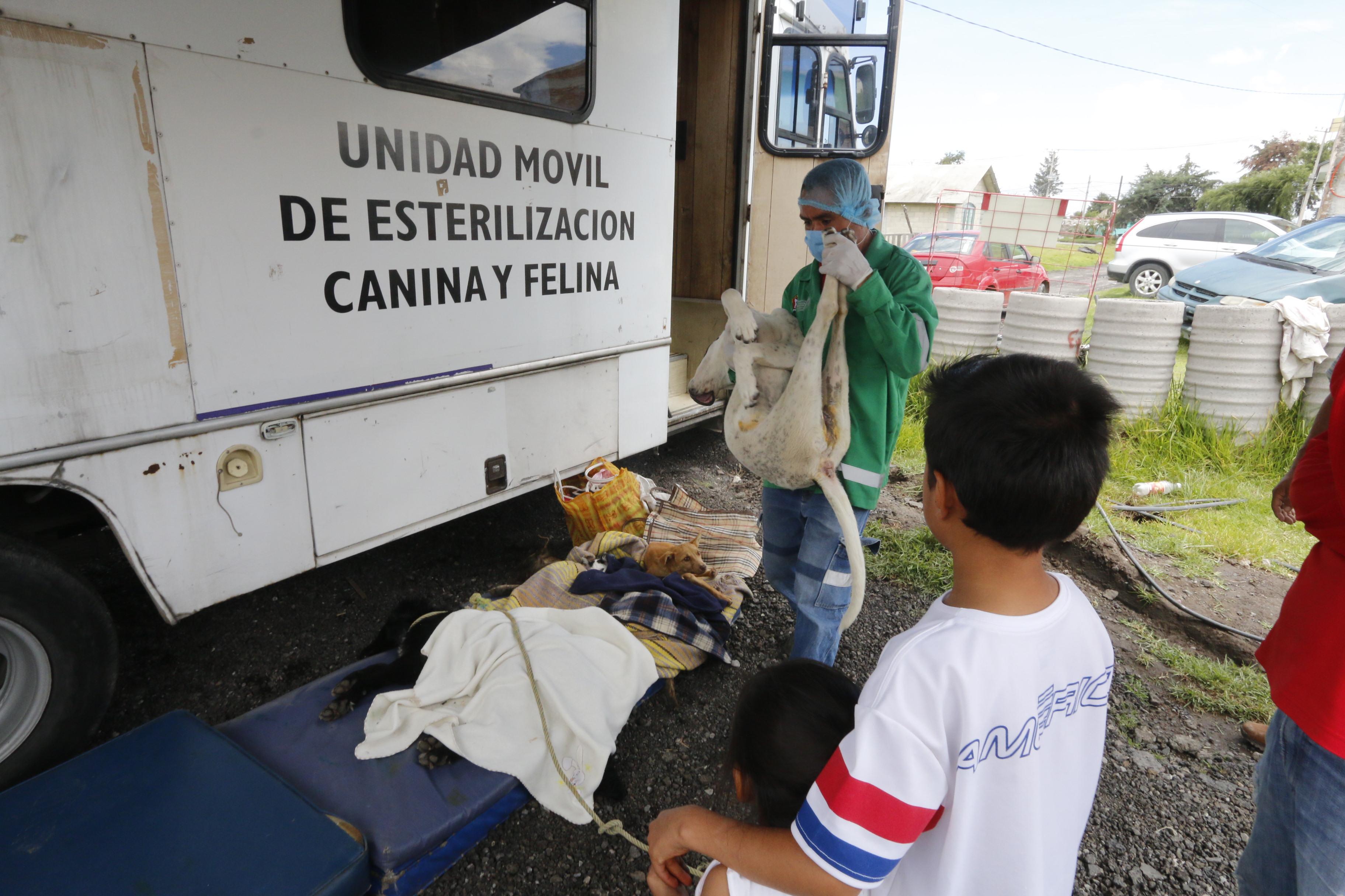 Realiza CCA más de 9 mil esterilizaciones en las 47 delegaciones de Toluca