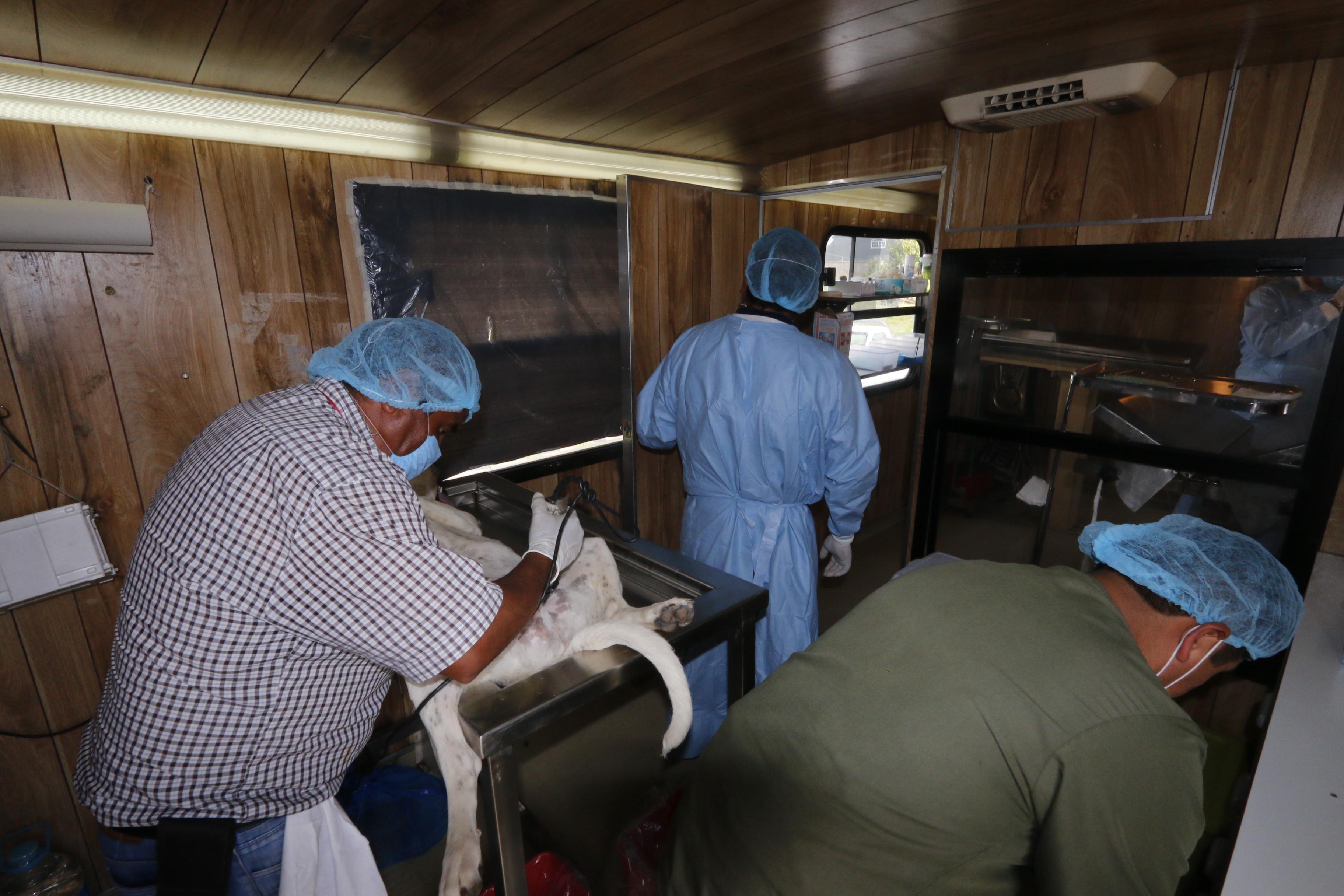 Brindará CCA servicio de esterilización y vacunación en periodo vacacional