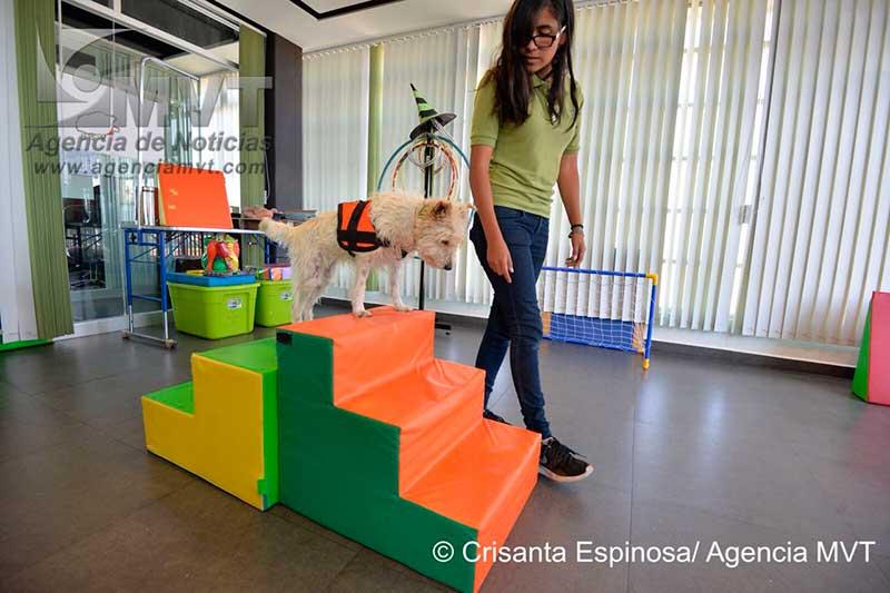 Rescatan universitarios perros maltratados y los convierten en terapeutas