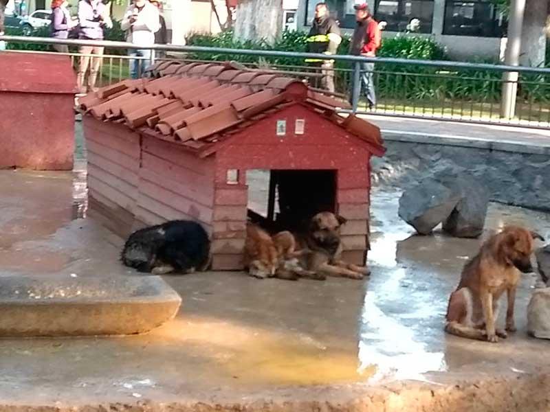 Ataque de perros deja 28 patos devorados, 6 heridos y dos ilesos en la Alameda de Toluca