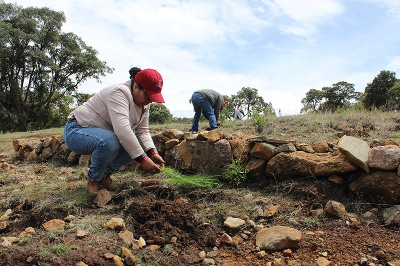 Reforestación en Aculco alcanza 85 por ciento de sobrevivencia