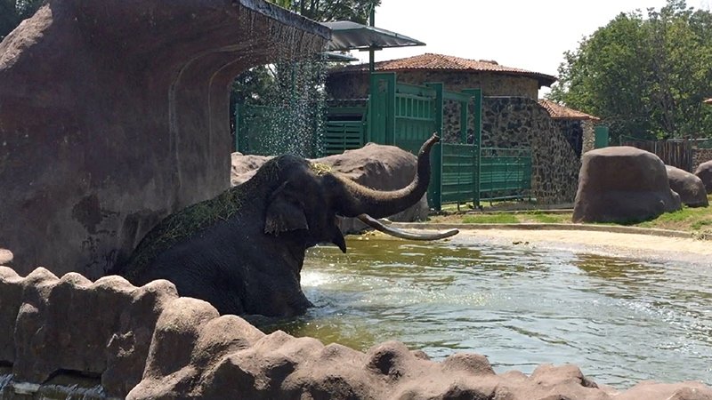 Extreman cuidados de animales de Zacango por ola de calor