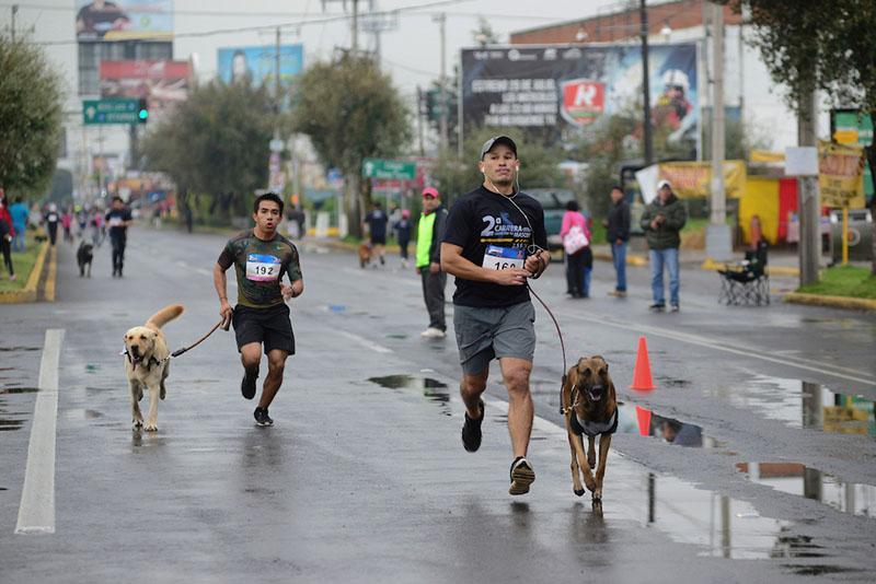 Piden extremar precauciones a quienes corren con sus perros