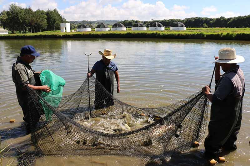 Rancho Tiacaque: ejemplo de productividad acuícola