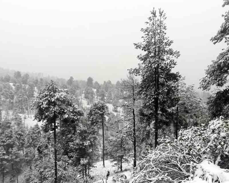 Reportan diez centímetros de nieve en el Xinantécatl; cierran accesos