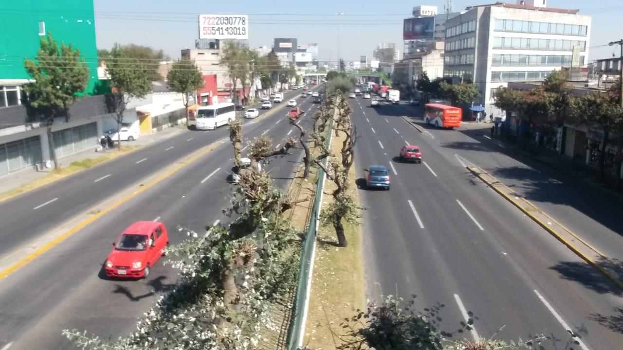 Denuncian poda ilegal de árboles en parques y camellones de Toluca