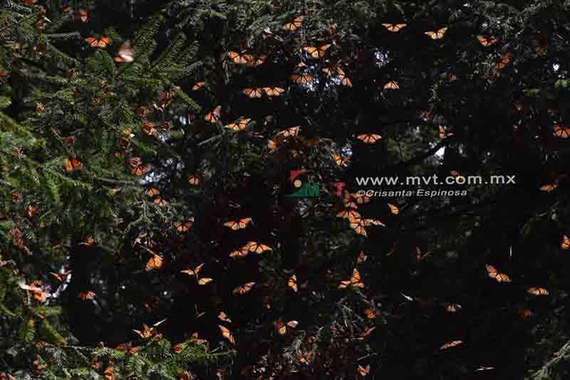 Sufre Zinacantepec de desabasto de agua en cinco comunidades