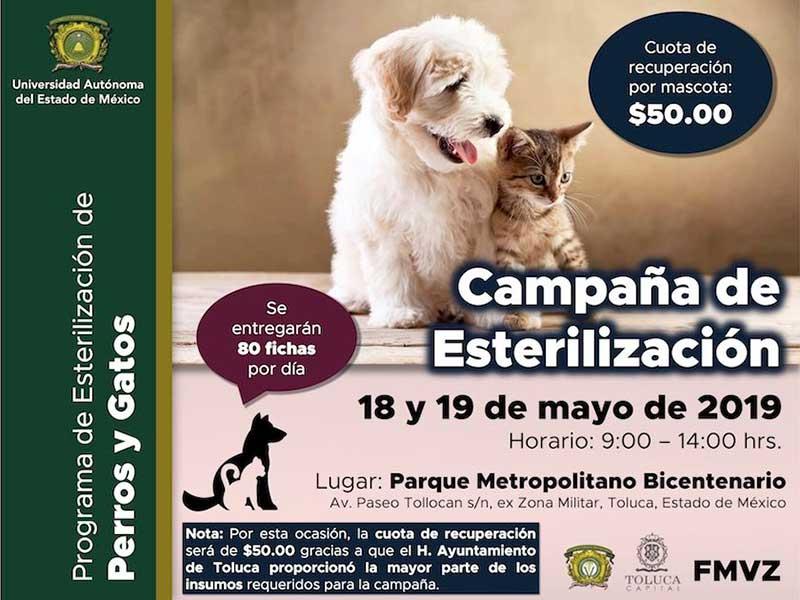 Invitan Toluca y UAEMéx a campaña de esterilización canina y felina