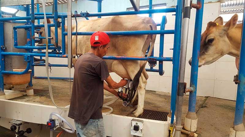 El Edoméx ocupa el 8º lugar nacional en producción de leche