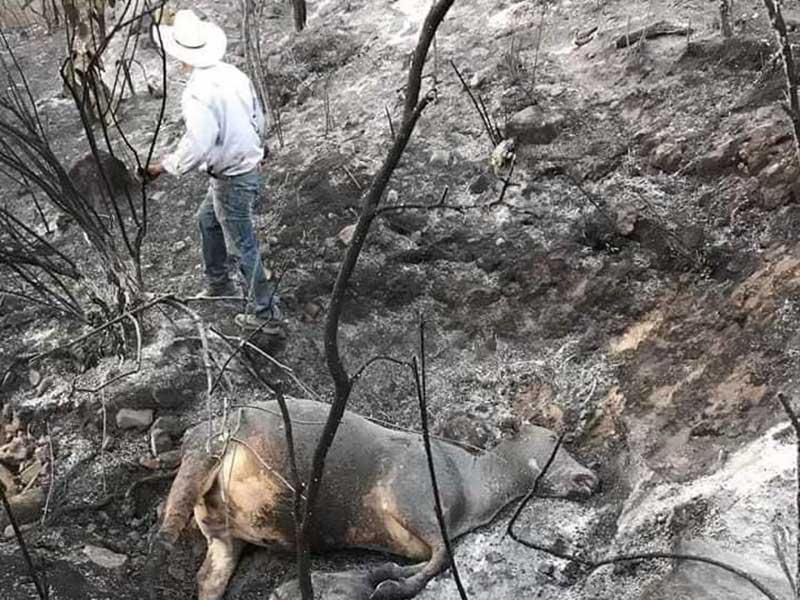Brigadistas tratan de controlar incendio forestal en Tlatlaya