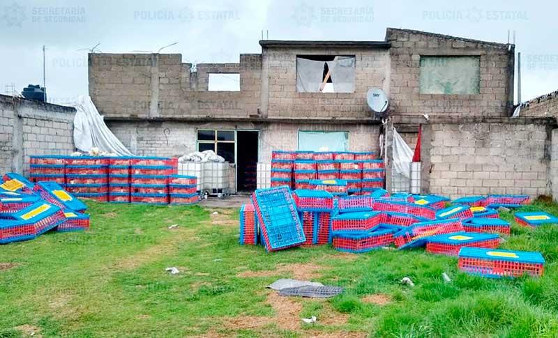 Policías rescatan 2 mil 331 pollos vivos y recuperar un camión robado en Otzolotepec