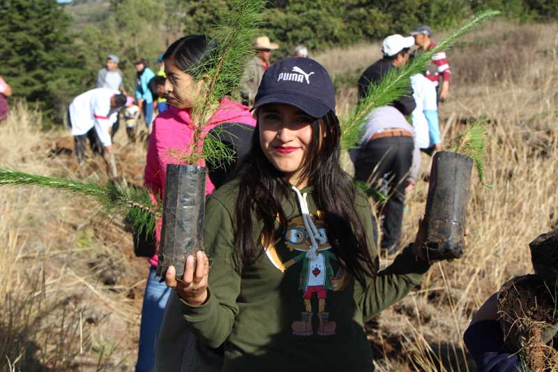 Se plantan 102 mil árboles en jornadas de reforestación social Edoméx