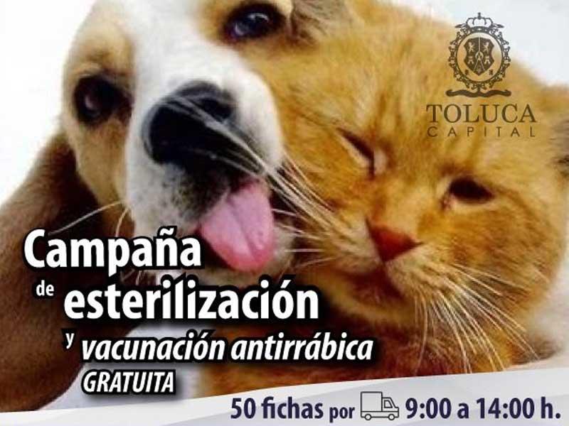 Continúan jornadas de esterilización y vacunación antirrábica en Toluca