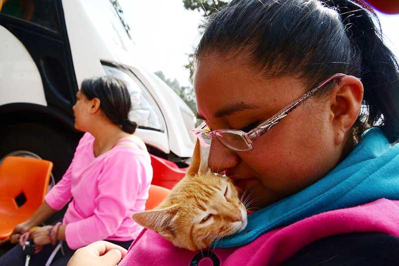 Un gato en la vida de un niño con discapacidad