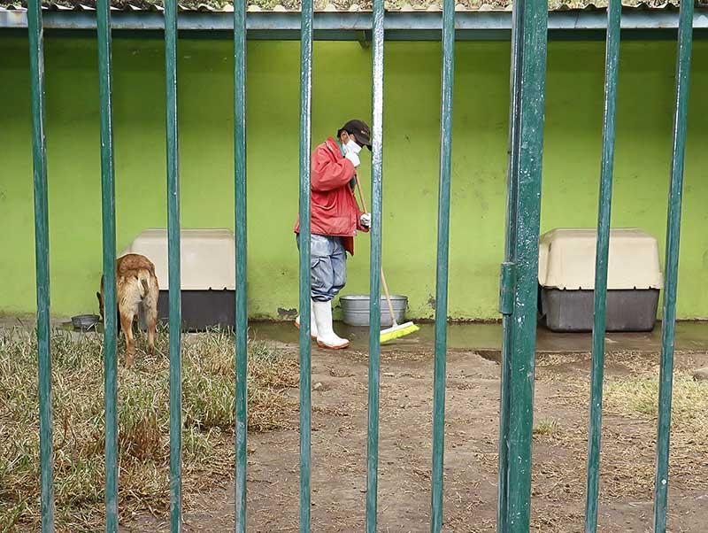 Atiende Medio Ambiente de Toluca denuncias por maltrato animal