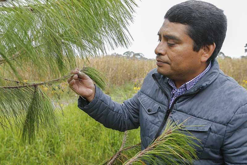 Investigador de la UAEM descubrió dos nuevas especies de avispa