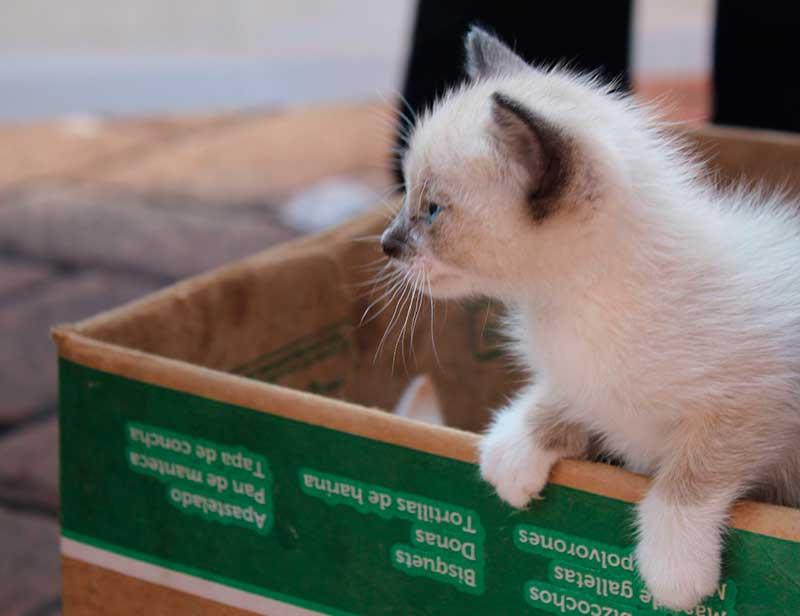 Secretaría de Salud llama a inculcar la tenencia responsable de mascotas