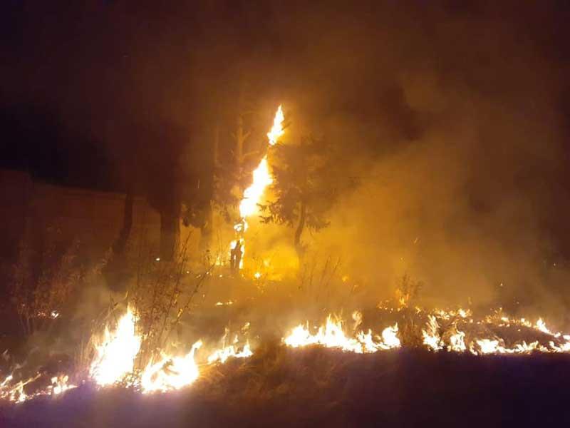 Incendian refugio de animales en Edomex