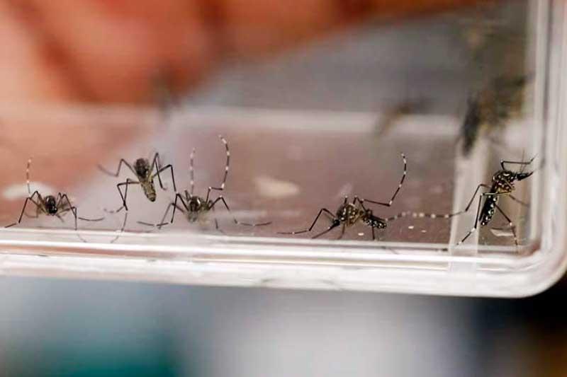 Realiza Secretaría de Salud acciones para prevenir Dengue, Zika y Chikungunya