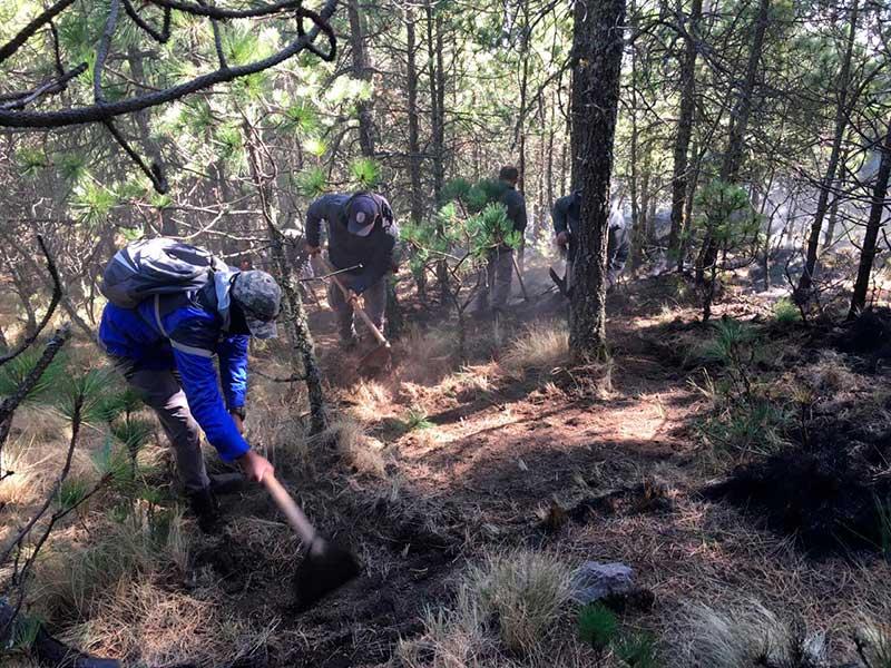 Reconocen gran destreza y dinamismo de la Brigada Forestal de Toluca