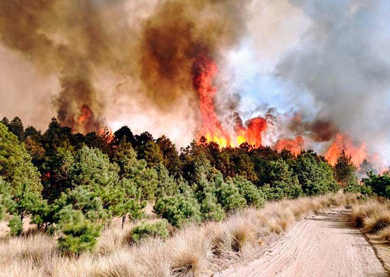 Brigadistas atienden otro incendio a las faldas del nevado de Toluca