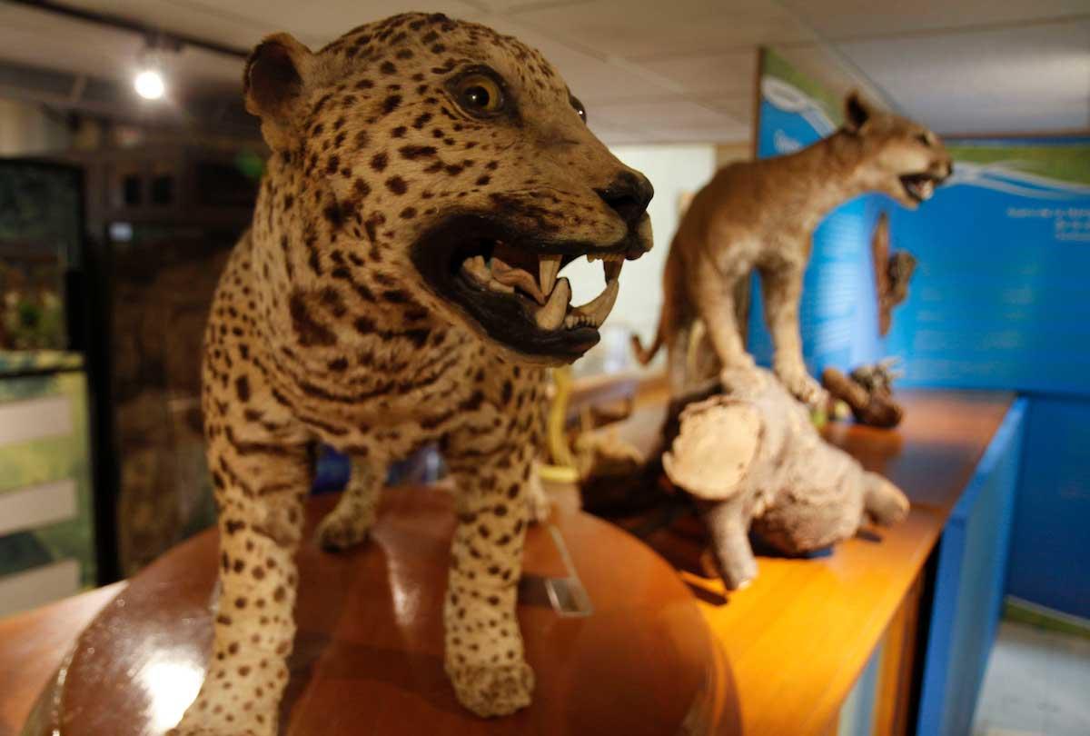 Reabren museos de la UAEM en Toluca y Malinalco