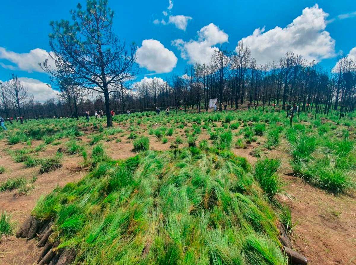 Pobosque reforesta áreas de Santiago Tlacotepec