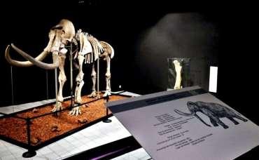 Museo de Historia invita a la gente a visitar al mamut y a niñas y niños ponerle un nombre