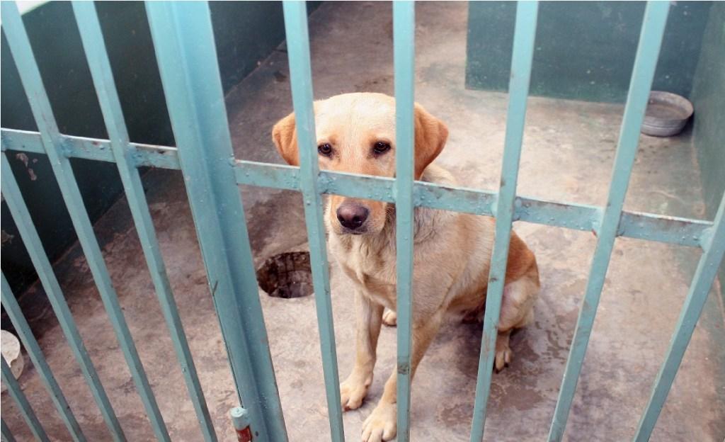 Aspectos del Centro de Salud Animal de Toluca , en donde se realizan esterilizaciones, entregas en adopción, entre otros servicios, para perros y gatos.