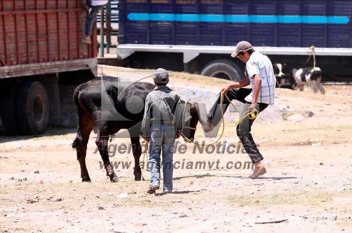 Diputados endurecen penas por maltrato animal