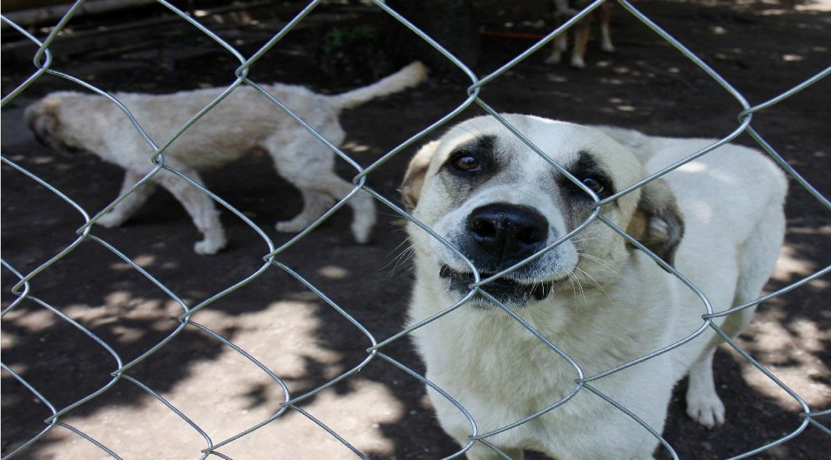 El Edomex propone hasta 9 años de presión por maltrato animal