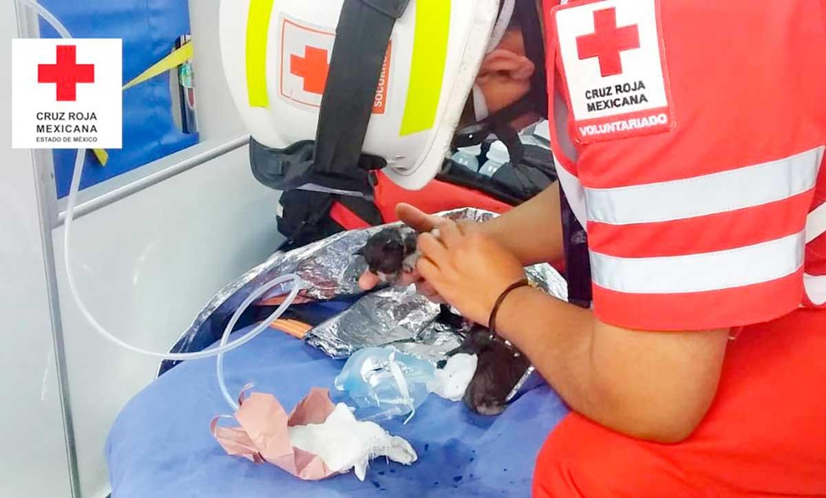Se incendia casa en Valle de Bravo, paramédicos rescatan a cuatro gatitos