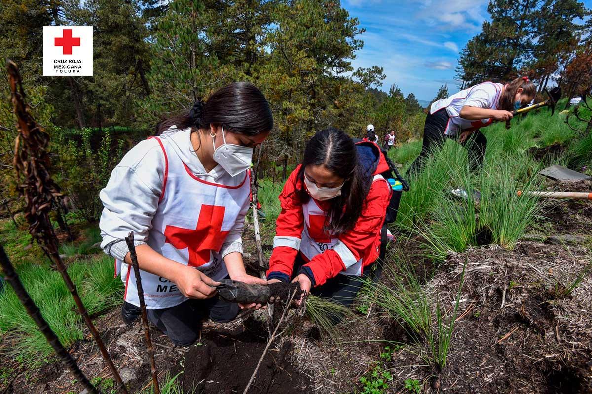 Voluntarios de Cruz Roja participan en reforestación del Nevado de Toluca