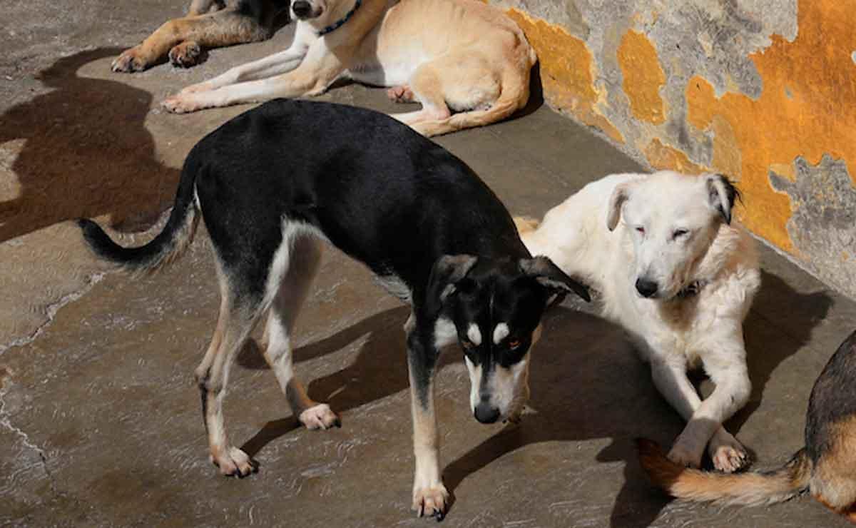 Edomex: Envenenan a varios perros en Toluca